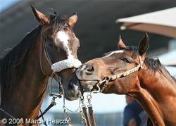 Kissing Ponies