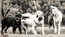 Jax, Hank, Abby, Mason