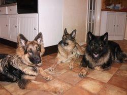 Norman, Inca & Max
