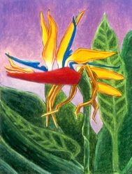The Magician's Headdress -  Bird of Paradise, Oil Pastel, 11x14, Original Sold