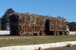 DOUBLE CARRIAGE CANE TRUCK