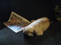 Kokkos is reading the newspaper