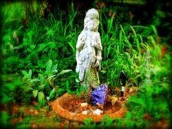 Wyte Raven Gardens
