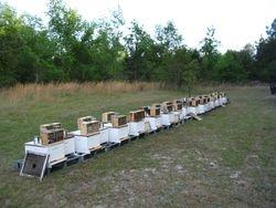 Glen Purdues Kite Branch Honey