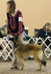 Puppy Sweeps 2012 National