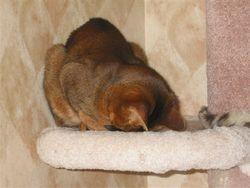 Mischief Sleeps Face Down!