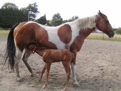 Moeder en kersverse zoon