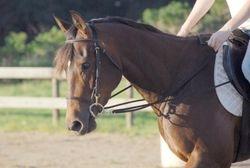 Jessie's EZ Chip aka Jessie, is a 2005 AQHA mare