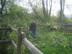 stupid tree fall from wind