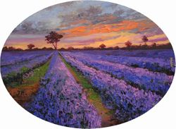 Evening on lavender field.