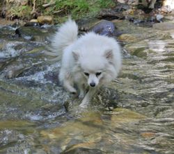 VICKY CROSSING THE CREEK