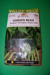 Growning beans in a bag