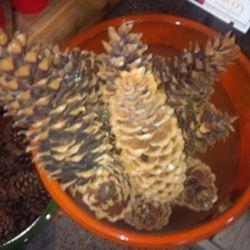Huge Sugar Cones
