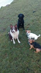 Daisy, Jacob, Pancho and Lily