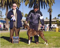 Koa Best of winners AKC show Ventura CA.