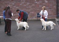Minor Puppy Dog Placing