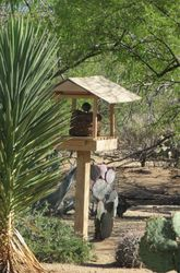 Bird Pagoda