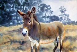 Emily the Donkey