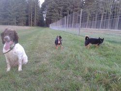 With new walk pals, Buddy & Herbie