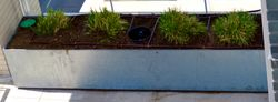 Installation of drip line to terrace planting beds