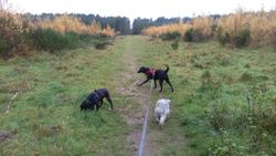 Running at the forest with Heidi and Tess