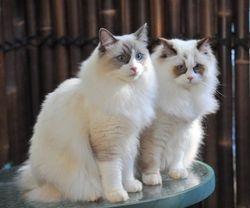 Charlie  &  Molly