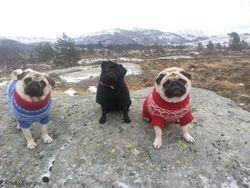 Selma, Angel & Ingeborg