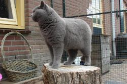 Feline op de boomstam