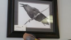 Framed Crow Watercolor
