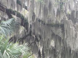 Spanish moss and palmettos