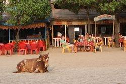 Goa, India 6