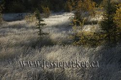 Hoarfrost,Alberta
