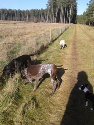 Another forest walk, this time sun!