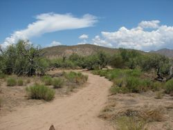 The trail from horseback.
