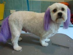 Purple tail n ears