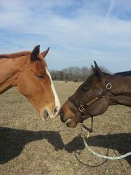 Sleepy & Reggae sharing some old track stories