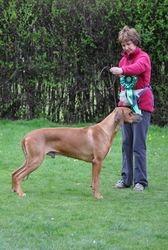 Sam with professional handler Janice