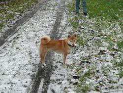 joepie, opnieuw sneew