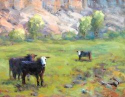 Cows in Escalante Canyon