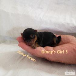 Ginny & Oakley's Girl 3