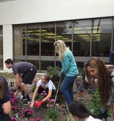 NBHS Gardening