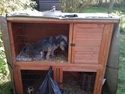 Errmmm, thought I'd check if the guineas were in!
