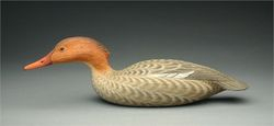 Swimming Merganser Hen