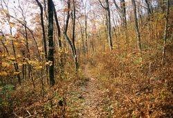 Bryon Reece Trail