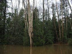 The Cedar Woods