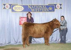 Reserve Champion Senior Heifer Calf