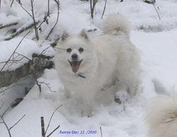 Aurora in loving memory of our beautiful girl