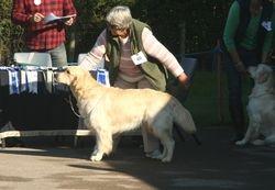 Class 6 Debutant Dog