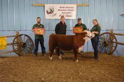 Casey- Division Champion and Grand Champion Bull-Fall Class 10/11/14