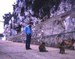 G white rock apes